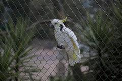 Free me! (Carlos Santos - Alapraia) Tags: ngc ourplanet animalplanet canon nature natureza wonderfulworld highqualityanimals unlimitedphotos fantasticnature birdwatcher ave bird pássaro freeme