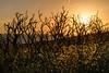 Burned ground (dlorenz69) Tags: bushfire fire sunset sonnenuntergang algarve coast skeleton trees bushes new life plants ground burned death nature evening rocks portugal
