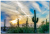(Ken Mickel) Tags: arizona cacti cactus clouds cloudy desert estrellla goodyeararizona kenmickelphotography landscape landscapedesert outdoors plants saguaro sunsets backlighting backlit nature photography goodyear unitedstates us