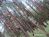 Korakundah (rajkumar.lark) Tags: amazingnilgiris evergreenforest forest hillstation korakundah korakundahestate korakundahteaplantations kundah landscape landscapephotography langur manjoor mountains mukurthinationalpark nature naturephotography nilgirilangur nilgirilangurtrachypithecusjohnii nilgiris ooty photography primate reservedforest sholas streams tamilnadu teaestate teaplantation teaplantations trachypithecusjohnii westernghats wildanimals wildlife larksphotography lark letsgetlost natureclicks nilgirimountains nilgirihillstation wildlifephotography wild forests travelphotography travel travelpictures totravelistolive places placeswego explore exploreplaces