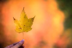 IMG_3679_Smoky Mountains (Alex Hsieh (椰子人)) Tags: ç´è² smokymountains smokymountainsnationalpark nationalpark 2016 fall fallfoliage autumn roadtrip travel tennessee northcarolina tn usa canon canon6d 6d