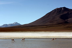 Bolivia (mbphillips) Tags: mbphillips canon450d 玻利维亚 南美洲 볼리비아 남아메리카 ボリビア 南アメリカ sudamérica américadelsur 玻利維亞 bolivia southamerica landscape paisaje 景观 景觀 경치 geotagged photojournalism photojournalist altiplano canonef85mmf18usm flamingo