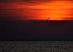 Sunset Lelystad