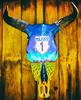 Numero Uno (Thomas Hawk) Tags: baja bajacalifornia cabo cabosanlucas loscabos mexico todossantos bull fav10