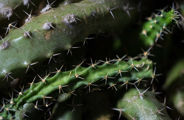 GreenCactus image