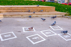 Pigeon Play (Michael Goldrei (microsketch)) Tags: fujilovers hopscotch x100t street austria hpf ground pigeons photos 2017 photographer st letters photography fuji 17 series pavement photo österreich european birds xseries play südtiroler chalk sudtiroler sidewalk platz hauptbahhof pigeon vienna bird fujifilm europe x wien