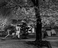 Hikawa jinja (tokyobogue) Tags: nikon nikond7100 d7100 tamron tamron1024mmdiiivc tokyo japan ukimafunado hikawashrine hikawajinja hikawa shrine night longexposure blackandwhite blackwhite monochrome ukimakoen sakura cherryblossom cherry blossoms trees spring hanami