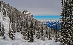 Crystal Bowl & Redemption Ridge (DCZwick) Tags: show winter ski skiresort mountain mountains rockymountains canadianrockies kickinghorsemountainresort khmr golden britishcolumbia bc canada pentaxq7 pentax01standardprime crystalbowl redemptionridge