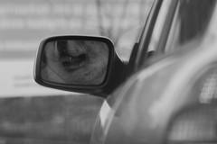 Cruising (Eric Spies) Tags: hund dog mirror spiegel rückspiegel rearviewmirror rearview aussenspiegel autofahrer car driver auto fahrer pkw fujifilm fuji fujinon xt10 xc xc50230 monochrom mono monochrome bw blackwhite blackandwhite sw schwarzweiss street deutschland germany