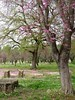 Olympia (Amber Cottreau) Tags: olympia green pink stones trees flowers olympic greece