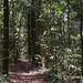 Arrowpoint rainforest