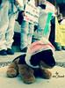 x-default (Aktiver Tierschutz Berlin (der Frank)) Tags: plüschtier stofftier schild kostüm animaltesting animalliberation demo protest vegan govegan demonstration germany berlin rotesrathaus ärztegegentierversuche ägt tierversuchsgegnerberlinbrandenburg bundgegenmissbrauchdertiere atb aktivertierschutzberlin nachtigall petazwei peta2 aktionfairplay tierversuche seasheperd mitgefühl compassion