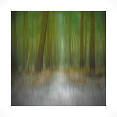 Solitude (Sandra Draper) Tags: d7100 snowywoodland icm