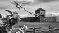Frühling (ZeitFoto Photography) Tags: bw monochrome washington vancouver pacificnorthwest fortvancouver juliannelson