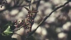 20180422-155650 - Spring Garden Bokeh (torstenbehrens) Tags: spring garden bokeh schleswigholstein deutschland m42 28200mm zhongyi objektiv turbo ii efm43 wecellent m42ef adapter
