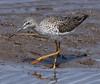F_042218e (Eric C. Reuter) Tags: birds birding nature wildlife nj forsythe refuge nwr oceanville brigantine april 2018 042218