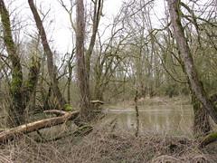 IMG_0921 (NICOB-) Tags: loire hiver nièvre bourgogne cher fleuve lumière arbres eau boisflottés embacles mousse crue