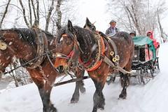 Horse drawn transport in the snow, Italan Dolomites (nick taz) Tags: dolomites italy horses transport snow blizzard badia