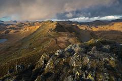 C O V E R T (elganjones1) Tags: snowdonia cnicht mountains light moody cymru landscape mountain summit elgan jones sonya7rii zeiss2470f4 wales ridgline putdoors outdoors