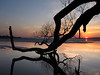 days of yore sunset silhouettes (Barbara A. White) Tags: sunset ottawariver 2012 tree bough reflections landscape riverscape ottawa ontario canada