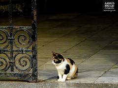 Esperando a que llegues (Andres Breijo http://andresbreijo.com) Tags: gato cat animal portal puerta door marruecos suelo floor tanger