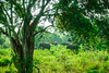 SriLanka 17_18 (25 von 48) (philip.eggimann) Tags: srilanka reisebilder travelling