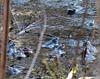 Blau-Blue (Anke knipst) Tags: frosch moorfrosch frog animal tier blau blue himmelmoor moor