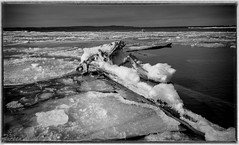 Pancake Ice (maureen.elliott) Tags: 7dwf blackandwhite landscape ice trretrunk georgianbay water nature spring