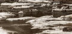 Quand la Thur gèle (mrieffly) Tags: glace gel lathur canoneos50d hautesvosges hautrhin valléedelathur