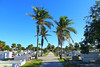 Key West (Florida) Trip 2017 0169Ri 4x6 7481Rif 4x6 (edgarandron - Busy!) Tags: florida keys floridakeys keywestcemeterycemeterieskey west cemetery