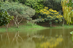 Árvores espelhadas (Márcia Valle) Tags: juizdefora minasgerais brasil brazil márciavalle verão summer landscape paisagem nikon d5100 water água reflections reflexos flores flowers lagoa ponmd trees árvores