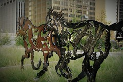 Eight Epic Horses Sculpture at Harley Hotchkiss Gardens, Courthouse Park (jmichael100) Tags: calgary sculpture steelplatesculpture horsesculpture