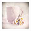 Mug (P@ti16) Tags: naturemorte blanc rose