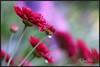 Flores después de la lluvia (María Jesús Feria) Tags: lluvia flor flores flower flowers jardín garden water colores colourartaward