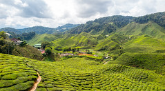 Tea at five (Martin Durco) Tags: tea field green clouds sun malaysia cameron highlands summer travel traveling landscape nature trees