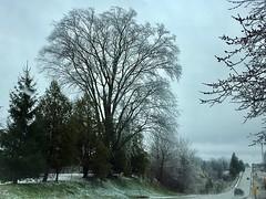 Freezing Rain Assault ... (Haytham M.) Tags: spring gloomy canada ontario drive street trees branches april windy cold rain freezing