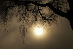 Foggy Weather..x (Lisa@Lethen) Tags: fog foggy weather spring nature tree silhouette branches sun sky cloud