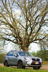 (RichardGlenSailors) Tags: canon 7d north georgia spring 2018 subaru forester xt oak tree