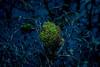 weed-in-a-sea-of-tar.py (Hasenaru) Tags: weed tar water green nature lake grass mud tree