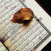 @rehla.almajhol - : *﷽ ﴿ إنَّ اللَّهَ وَمَلَائِكَتَهُ يُصَلُّونَ عَلى النَّبِيِّ يَا أَيُّهَا الَّذِينَ آَمَنُوا صَلُّوا عَلَيْهِ وسَلِّمُوا تَسْليمًا  ﴾. ﷺ* #الله #جمعةمباركة #الجمعة #البحرين #وناسة #الخليج #قران_كريم- كن داعيا للخير - منشن شخص تنصحه بم (doaamuslim) Tags: ifttt instagram دعاء المسلم أذكار أدعية القرآن السنة doaamuslim
