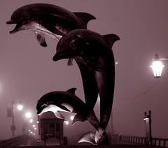 Dolphin Statue and  Fog (Damian Gadal) Tags: santabarbara dolphinstatue stearnswharf fog california