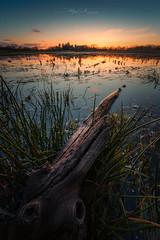 Couchant sur la Dombes (Stéphane Sélo Photographies) Tags: france natureetpaysages paysage pentax pentaxk3ii sigma1020f456 ain bichromie blending couchant coucherdesoleil dombes landscape nature sun sunlight sunset étang