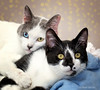 Easter and Sunday! (Mimi Ditchie) Tags: cat cats woodshumanesociety adoptable cateyes easter sunday