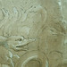 PRIMATICE - Jeune Homme ailé sonnant d'une Trompe auprès d'un Troupeau de Cygnes (Louvre INV8570) - Detail 08