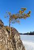 Pinus sylvestris (talaakso) Tags: finland ice is jää kallio olympus olympustoughtg5 pinussylvestris pirkanmaa rock tg5 toughtg5 terolaakso jäkälä kivi lakekukkia landscape landskap lichen luopioinen maisemakuva mänty naturelandscape pine talaakso pälkäne fi furu tall