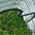 Cloud Forest conservatory in the Gardens by the Bay in Singapore thumbnail