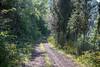 sulla-strada-per-l'appietto (Mancini photography) Tags: path strada sentiero alberi trees nature walking passeggiata green