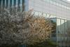 水辺の森公園の桜 (HRS_Kenzy) Tags: nagasaki 長崎市 水辺の森公園 桜 夕景