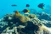 奄美大島 ダイビング (GenJapan1986) Tags: 2018 ダイビング 太平洋 奄美大島 奄美市 旅行 海 離島 鹿児島県 日本 japan sea kagoshima travel island amamioshima underwater nikon1aw1