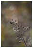 Diaplan 1 (Outlaw Pete 65) Tags: macro closeup natura nature colori colours nikond600 meyeroptikdiaplan80mm collebeato lombardia italia
